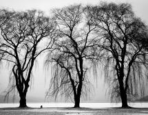 trees-238486_960_720